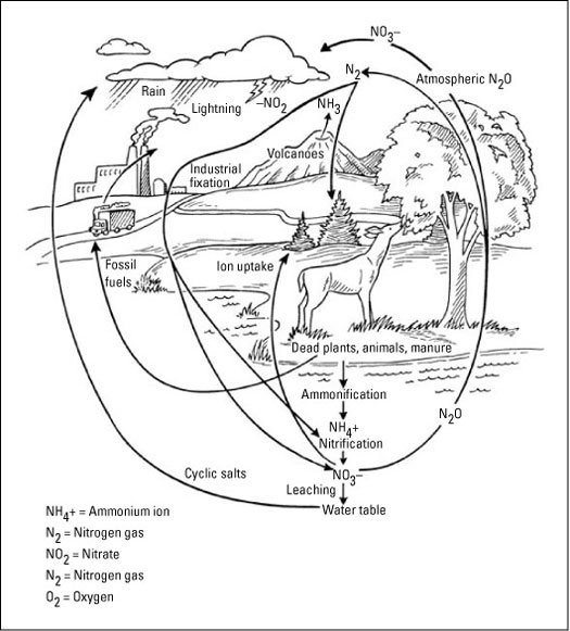 Discovering the Biogeochemical Cycles - dummies