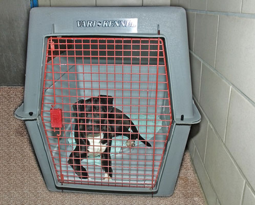 One good choice for a doggie den is a plastic crate with solid sides and a door that you can leave
