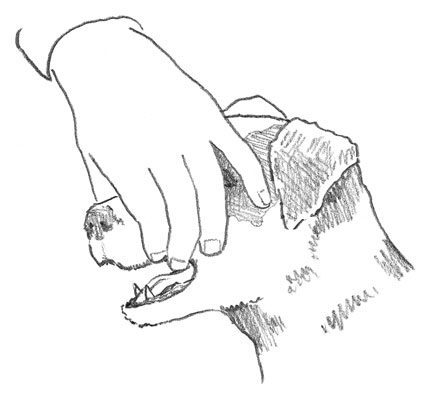 A little pressure on your dog's pressure points gets her to open her mouth.