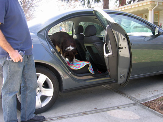 Cure your dog's car phobia step by step.