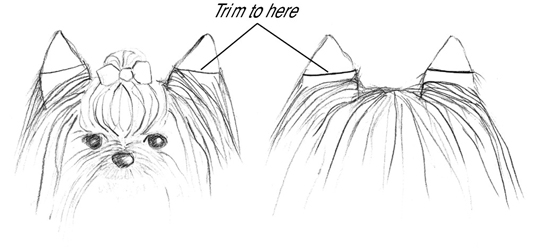 How To Groom A Yorkshire Terrier Dummies
