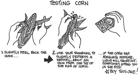How to test and select corn for canning.