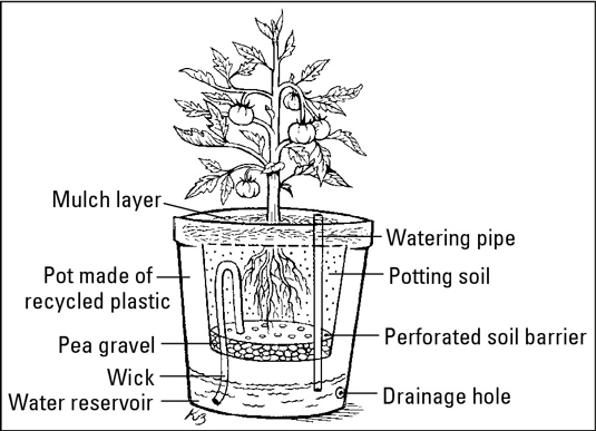A tomato plant potted in a self-watering container.