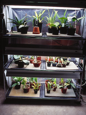 Use a fluorescent light system if your home lacks sufficient bright light for orchids.