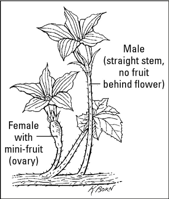 Identifying the male and female flowers of a plant.