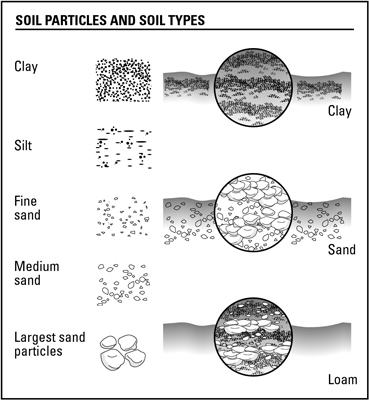 Determine the type of soil you have.