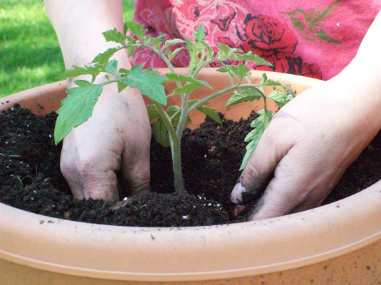 186806 image3 jpg. Container Gardening  How to Plant Vegetables in Pots   dummies