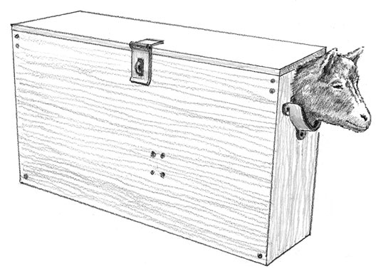 A kid, baby goat, positioned in a kid holding box that will immobilize it while its horn buds are burned.