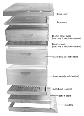 The basic components of a modern Langstroth hive.