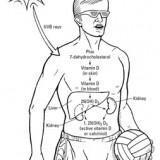 How the body creates vitamin D.