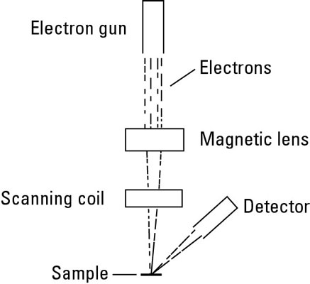 See at the nano level with electron microscopy dummies diagram of a scanning electron microscope ccuart Image collections