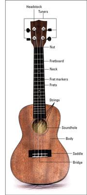 A typical ukulele.