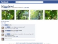 View of a Facebook Photo Album from the perspective of its creator.