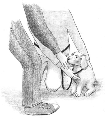 Bracing reassures your young puppy when meeting unfamiliar people. [Credit: Illustration by Barbara