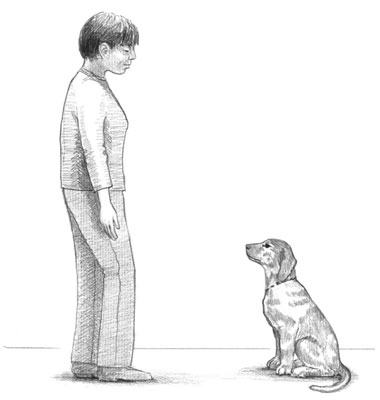 A puppy sitting in front of its owner, waiting for permission to do something.