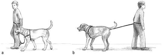 Walk forward, turning as your puppy pulls, and then praise him as he catches up. [Credit: Illustrat