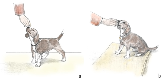 Illustration of how to teach your dog to sit.