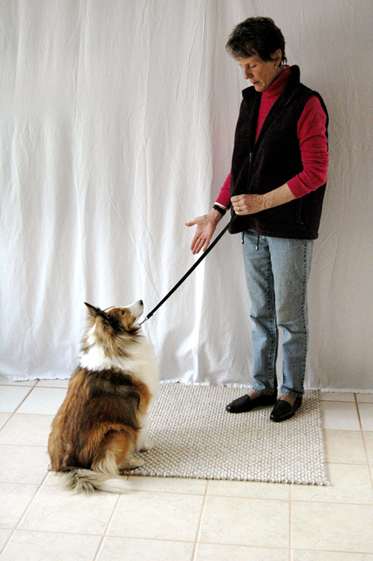 Woman tells her dog to stay with a hand command.