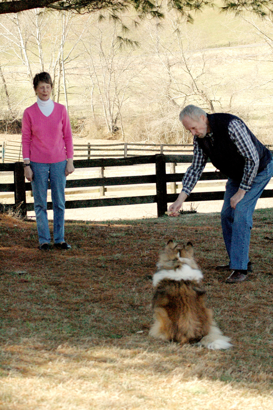 A man and woman training a dog to ignore distractions.