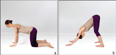 The steps in the downward-facing dog posture.