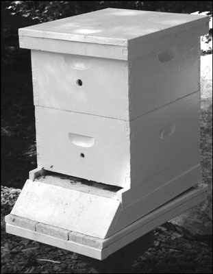 Holes the size of wine corks are useful for hive ventilation. [Credit: Photograph courtesy of Howla
