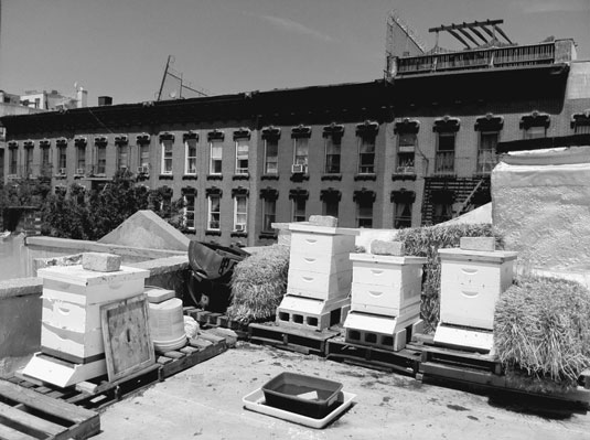 A rooftop is a great location for urban hives. Note the rocks to keep covers from blowing off, bale