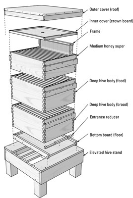 The Parts Of A Beehive Dummies