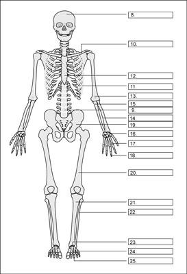 [Credit: From LifeART®, Super Anatomy 1, © 2002, Lippincott Willi
