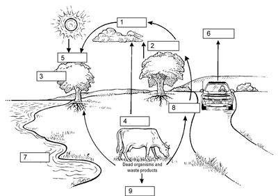 Biology Basics: Matter Cycling within Ecosystems - dummies