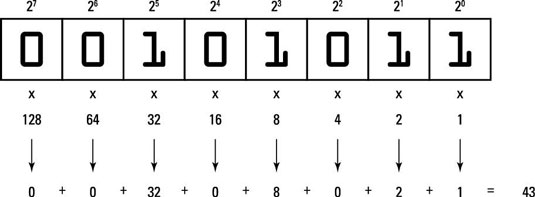 Basics of Binary for C Programming - dummies