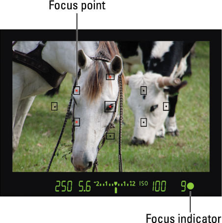 Basics of Viewfinder Focusing on the Canon Rebel T5/1200D