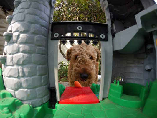 There's a monster at the castle door! This frame shows the dog just noticing the carrot befor