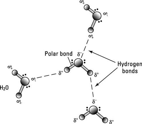 4 Types of Chemical Bonds - dummies