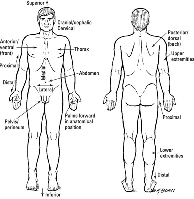 Medical Terminology For Regions Of The Body Dummies