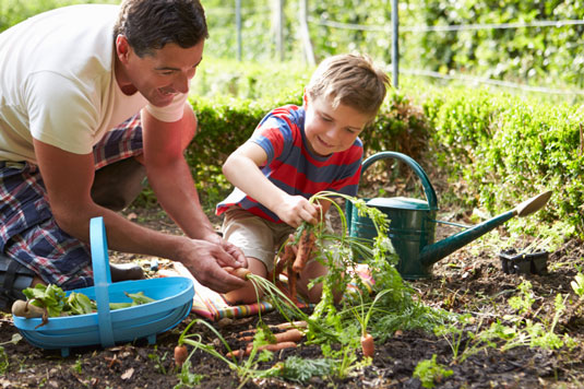 Picking carrots in a garden.