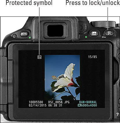 Press the AE‐L/AF‐L button to give an image protected status.