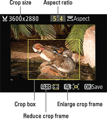 The yellow box indicates the ­cropping frame.