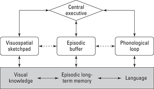 The working memory model of short-term memory.