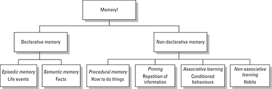 The different types of long-term memory.