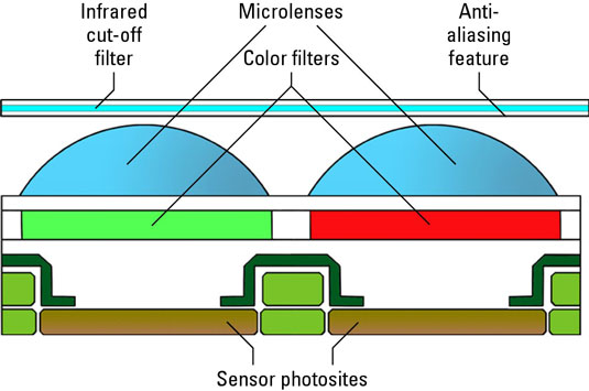 The image sensor of a digital camera is composed of sensor photosites, color filters, microlenses and an infrared cut-off filter.