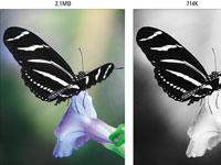 Color image files are larger than grey-scale pictures. The image on the right is one-third the size of the full-color version.