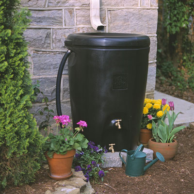 A rain barrel collects water from the building's roof for use in the garden. [Credit: Rain Wa