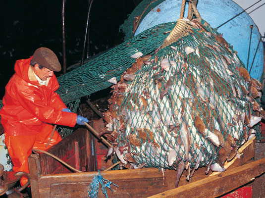 Net fishing is bad for sea life and the ecosystem. [Credit: Digital Vision]