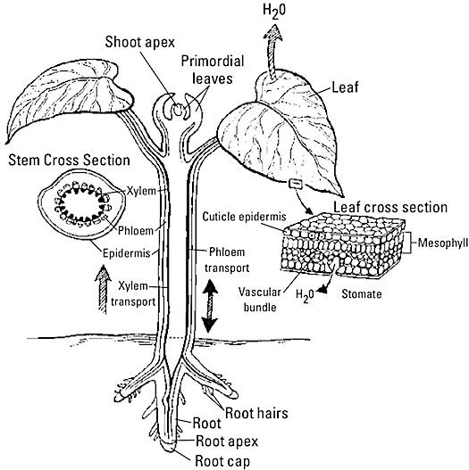 asvab-plant-anatomy