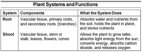 asvab-plant-systems