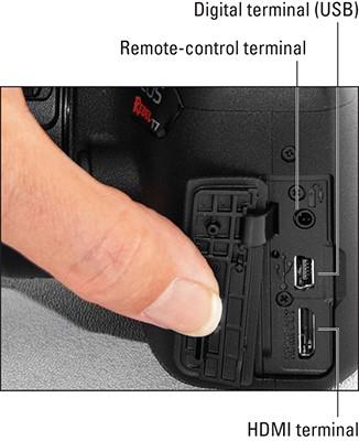 CanonRebel-terminals