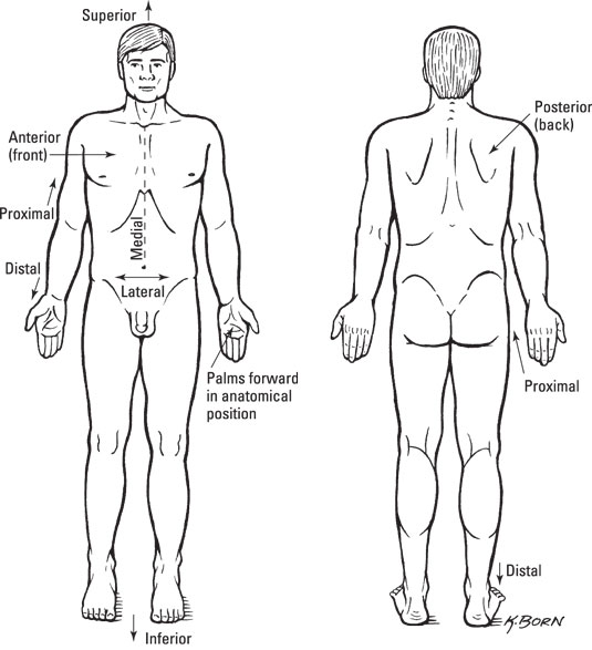 Standard Anatomical Position Dummies