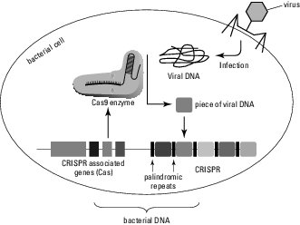 CRISPR-cas in nature