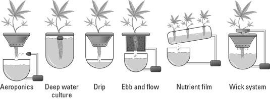 cannabis hydroponic systems