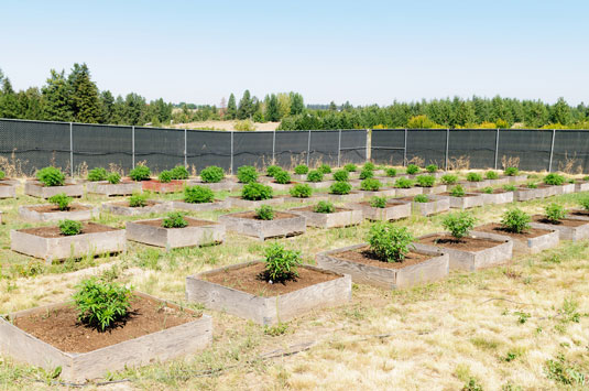 cannabis outdoor farm